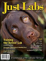 Just Labs 2