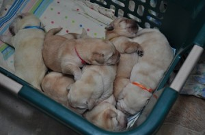 A pile of pups!